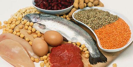 protéine-sources