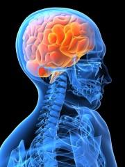 silhouette avec cerveau